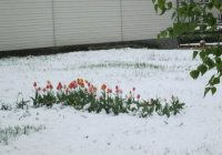 В Татарстане выпал майский снег (ФОТО)