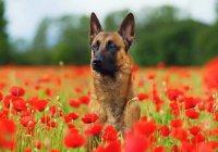 В Казани пройдет «День здоровья» для домашних животных