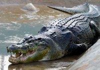 Крокодилы съели священнослужителя в Зимбабве