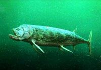 В казанском музее покажут хвост «рыбы-бульдога»