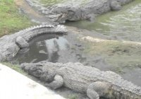 История про священнослужителя, съеденного крокодилами, оказалась розыгрышем