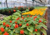 На цветочное оформление города Казани потратят 50 млн рублей
