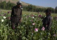 Афганистан – кладбище грёз  (наука о том, как наломать дров и слинять в кусты)