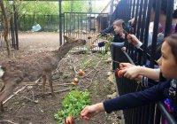 В Казанском зоопарке появился Бэтмен
