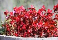 Казанцам обещают очень теплое лето