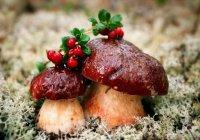 Татарстан попал в топ-20 регионов по эффективности использования лесных ресурсов