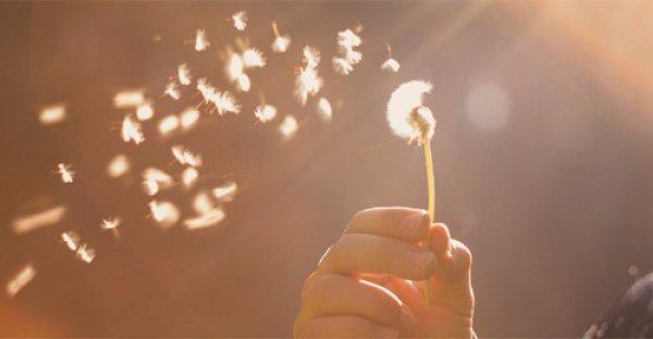 Милосердие – свойство мягких сердец