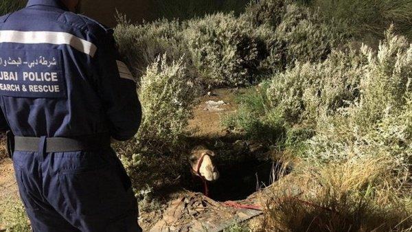 Когда сотрудники полиции приехали на место, они увидели, что животное почти целиком оказалось в плену сточных вод