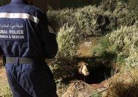 Полиция Дубая спасла жизнь верблюду