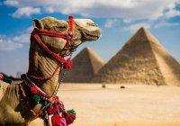 Туристов предупредили об угрозе терактов в Египте