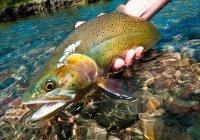 В Татарстане появятся свои форель и лосось