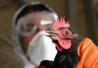 Эксперты: Причиной вспышки птичьего гриппа в РТ были дикие птицы