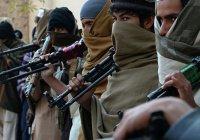 СМИ: ИГИЛ подбирается к России через Афганистан