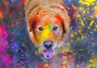 Всероссийский фестиваль красок состоится в Челнах