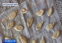 В Башкирии на тыквенных семечках разглядели аяты из Корана