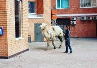 В центре Казани замечен верблюд (ФОТО, ВИДЕО)