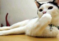 Отель в Абу-Даби нанял на работу кошек