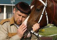 Кадыров показал лошадей, подаренных принцем Абу-Даби
