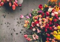 В Челнах ищут место для проведения фестиваля цветов