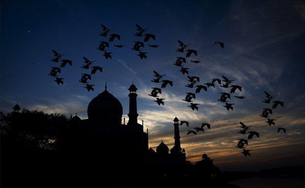 Ночь Предопределения (Ляйлятуль-кадр) – одна из последних десяти ночей Рамадана