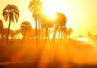 Мусульмане ОАЭ постятся в условиях 50-градусной жары