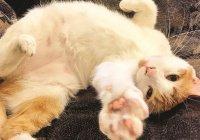 Ученые доказали, что кошек одомашнили на Ближнем Востоке