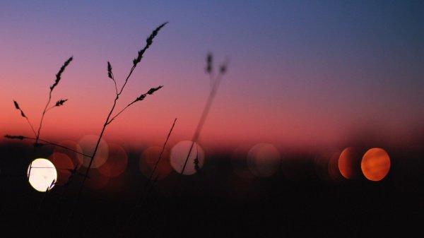 Признаком Ночи предопределения является то, что эта ночь чистая и светлая