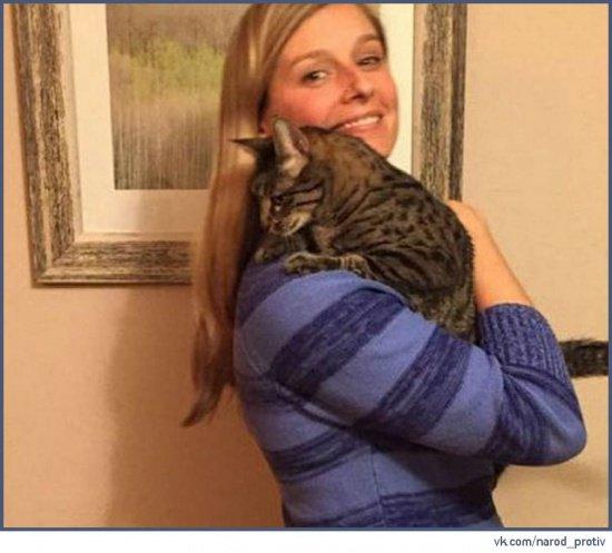 Кошка из Афганистана чудесным образом нашла приют в США (Фото)