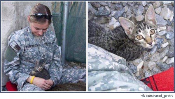 Кошку Болдин называет своим ангелом-хранителем.