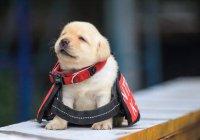 Самую симпатичную служебную собаку выбирают в Татарстане