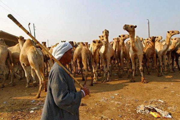 Эрдоган поддержал позицию Катара потребованиям арабских стран