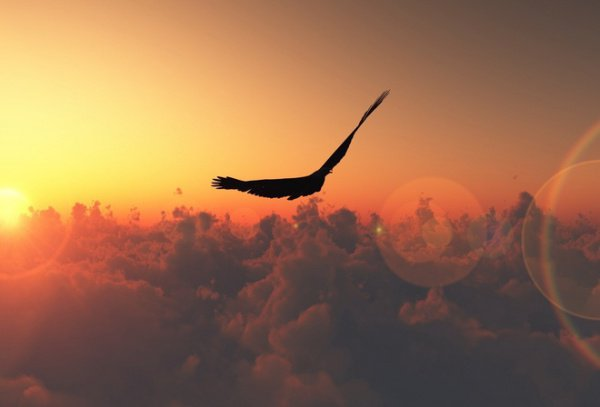 Один ученый сравнил веру с птицей: одно крыло ее – надежда, другое – страх, а голова этой птицы есть любовь, любовь к Богу