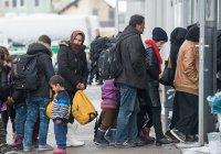 Семья украинцев получила убежище в Германии под видом сирийских беженцев