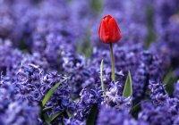 Миллион цветов посадят в Зеленодольске