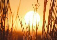 Ученые: В этом году жаркого лета не будет