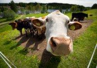 Александр Ткачев призывает Татарстан производить больше мяса