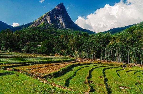 Адам был низведен на землю, на одну из гор Цейлона