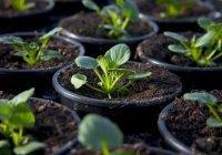 Венгерская компания создаст в РТ предприятие по выращиванию саженцев