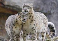 «Детский Сабантуй'чик» состоится в зоопарке Казани