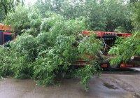 В Казани дерево упало на автобус (ФОТО)