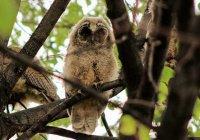 В университетском городке КФУ поселились редкие виды птиц