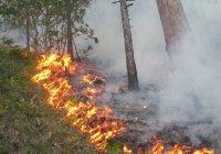 МЧС: В 14 районах Татарстана прогнозируется 4-й класс пожароопасности