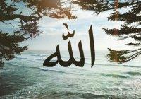 Если Аллах не нуждается в нас, то зачем Он нас создал?