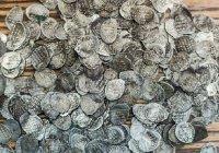 Монеты времен правления Ивана Грозного обнаружены на раскопках в Казани