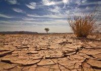 Ученые: жара с Ближнего Востока может «перекинуться» на Россию