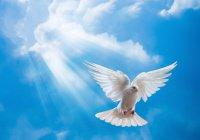 Для голубя Нух сделал дуа, и голубь стал любимой птицей человека...