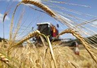 Потенциал урожая на полях Татарстана в 2017 году очень высокий