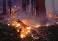 Минсельхоз: в Татарстане 7 лет не было лесных пожаров