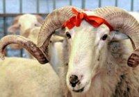 В Душанбе впервые разрешили забой скота на Курбан-байрам