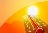 Ученые: 2016 год стал рекордсменом по жаре на планете